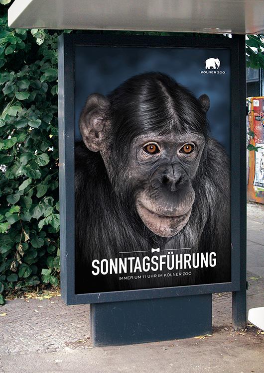 Kölner Zoo Sonntagsführung Plakat an einer Bushaltestelle
